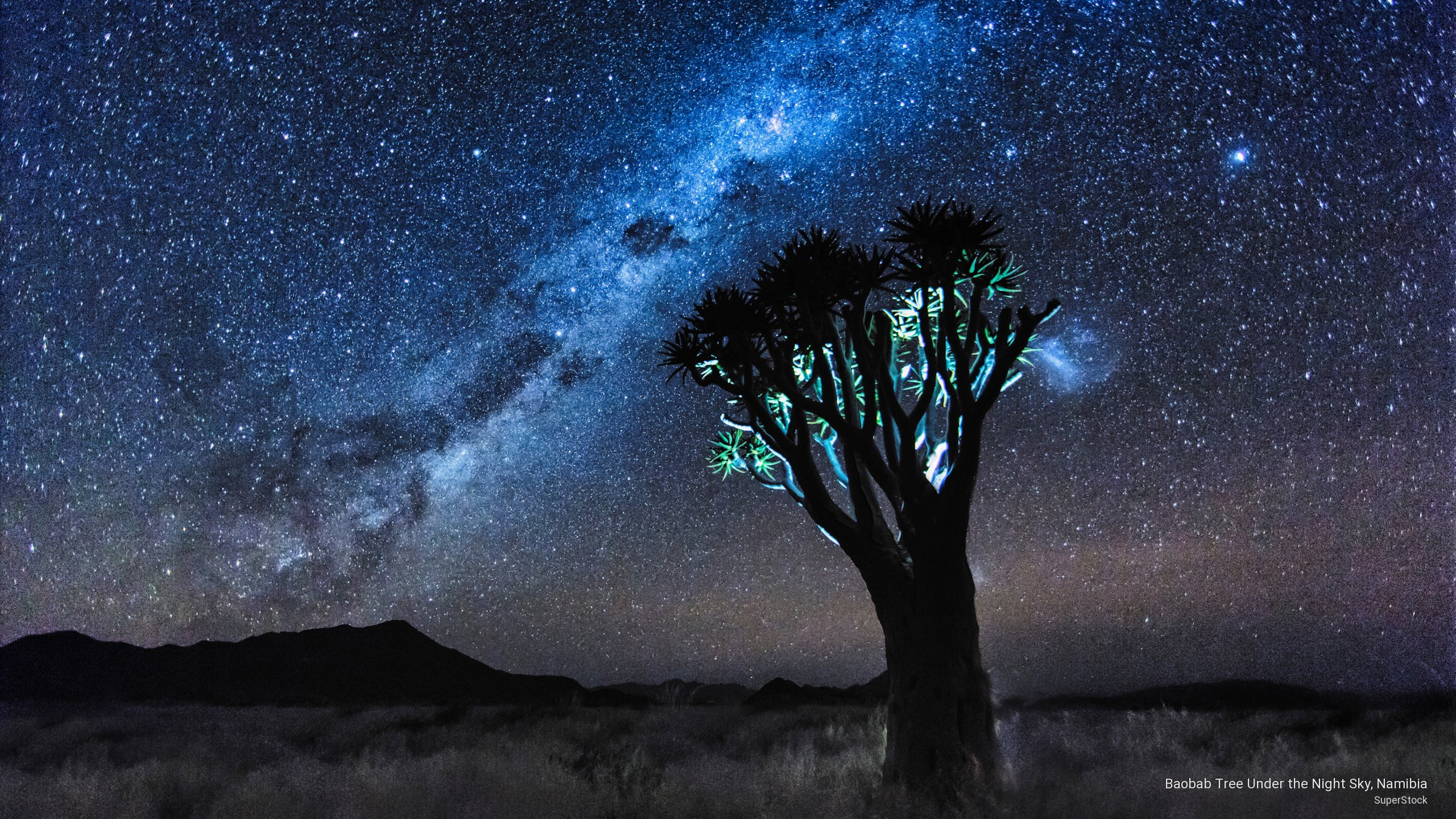 Baobab Tree Under the Night Sky, Namibia