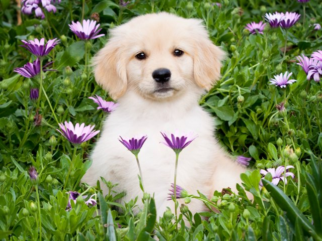 free spring screensavers with animals 58143 loadtve